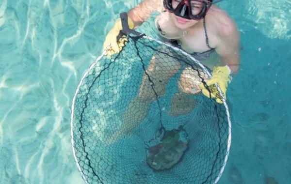 cleaning sea dubrovnik